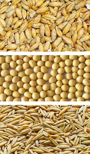 Agri Seeds - Triticale, soybeans, rye